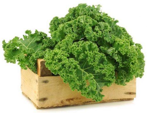 5 razones para comer Kale y 1 receta deliciosa